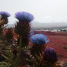 Desert flowers blue red Lanzarote by Medilludesign