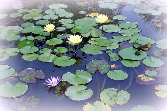 Red's Lily Pond by AuntDot