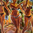 Three Ladies by dornberg