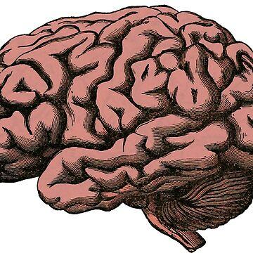Anatomical Brain  by Zehda