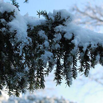 Snow tree by derbyshireduck
