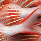 Fish Tails by muzy