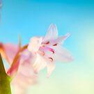 Pink Hyacinth Flower by heidiannemorris
