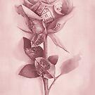 A rare rose by jamesormiston