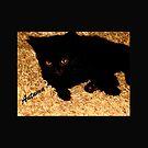 DIE AUGEN EINER SCHÖNEN schwarzen Katze von SherriOfPalmSprings Sherri Nicholas-