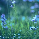 Blue Spring Flowers by Kasia-D