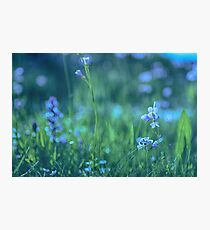 Blue Spring Flowers Photographic Print