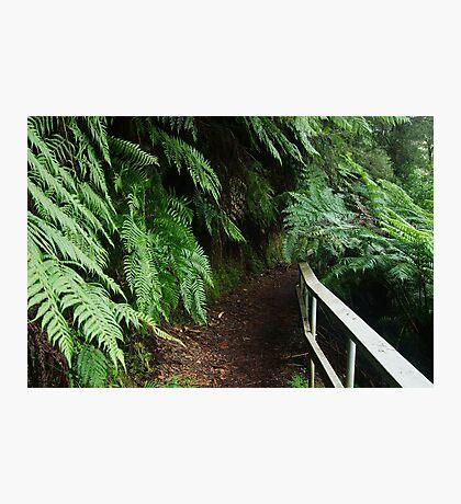 Tramline Walkway, Walhalla Photographic Print