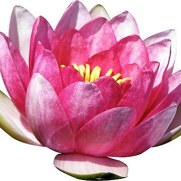 FLOWER de afremovartist