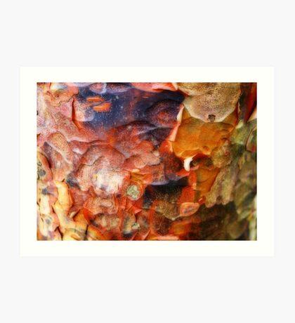 Ornamental Bark Art Print