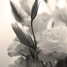 Every flower enjoys the air it breathes by Cordelia