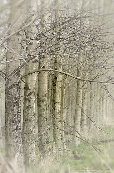 Dancing Trees by Annie Lemay  Photography