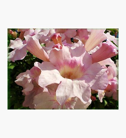 Pink Petunias in Spring Photographic Print