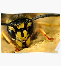 Jasper wasp up close and personal Poster