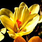 Spring Flowers #2 by Trevor Kersley