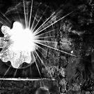 Light Burst by Andrew Ness - www.nessphotography.com