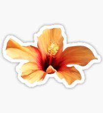 ORANGE FLOWER Sticker