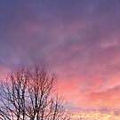 tree branches silhouetted against vibrant sunrise by brilliantbeings