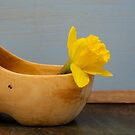 Daffodil in wooden shoe by vannaweb