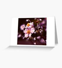 White Blush Greeting Card