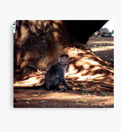 Indian Monkey Canvas Print