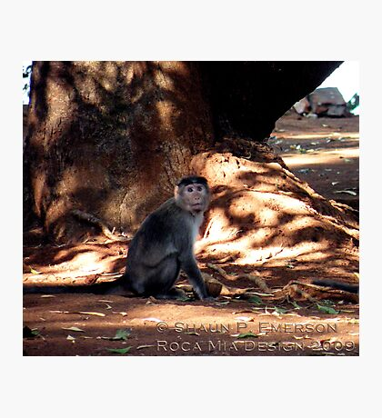 Indian Monkey Photographic Print
