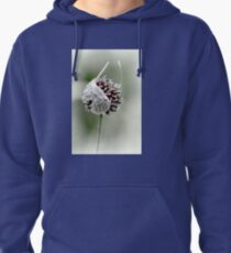 Fit to Burst...........Lyme Gardens,Dorset UK Pullover Hoodie