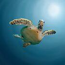 Turtle Digital Painting by TMBTM