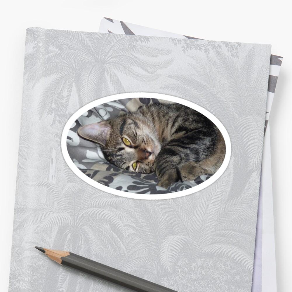 « Coco le chaton » par Martin Boisvert