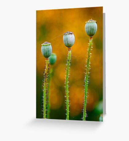 Study of Poppy Seed Pod #5 Greeting Card