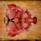 Vintage Roses by Michael  Petrizzo