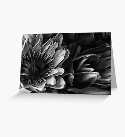 'Lillies in the Dark' Greeting Card