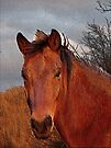 Horse Of The Setting Sun by NatureGreeting Cards ©ccwri