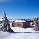 Footprints in the Snow (Bunny Wabbit Twacks) by Brian Carey