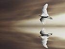 Taking Flight by Nathalie Chaput