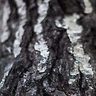 Texture by Daniel Wills