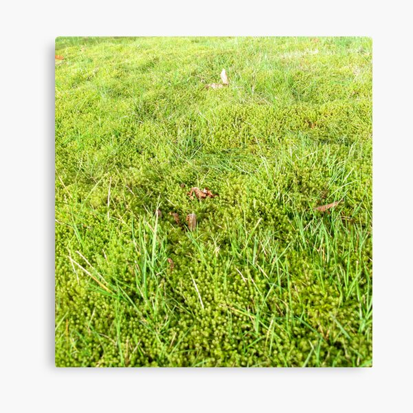 Moss and Grass Canvas Print