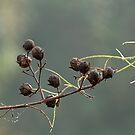 Seed Pods by Ostar-Digital