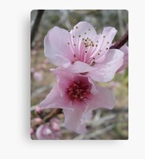 Plum Blossoms Canvas Print