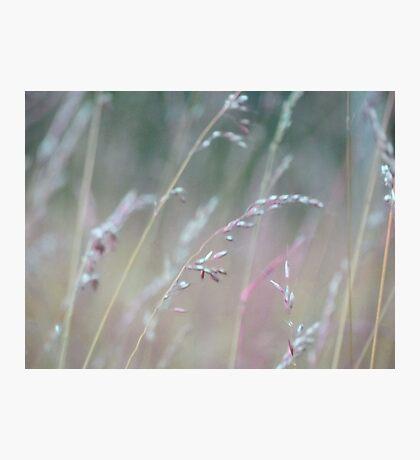 Summer Grass 10 Photographic Print
