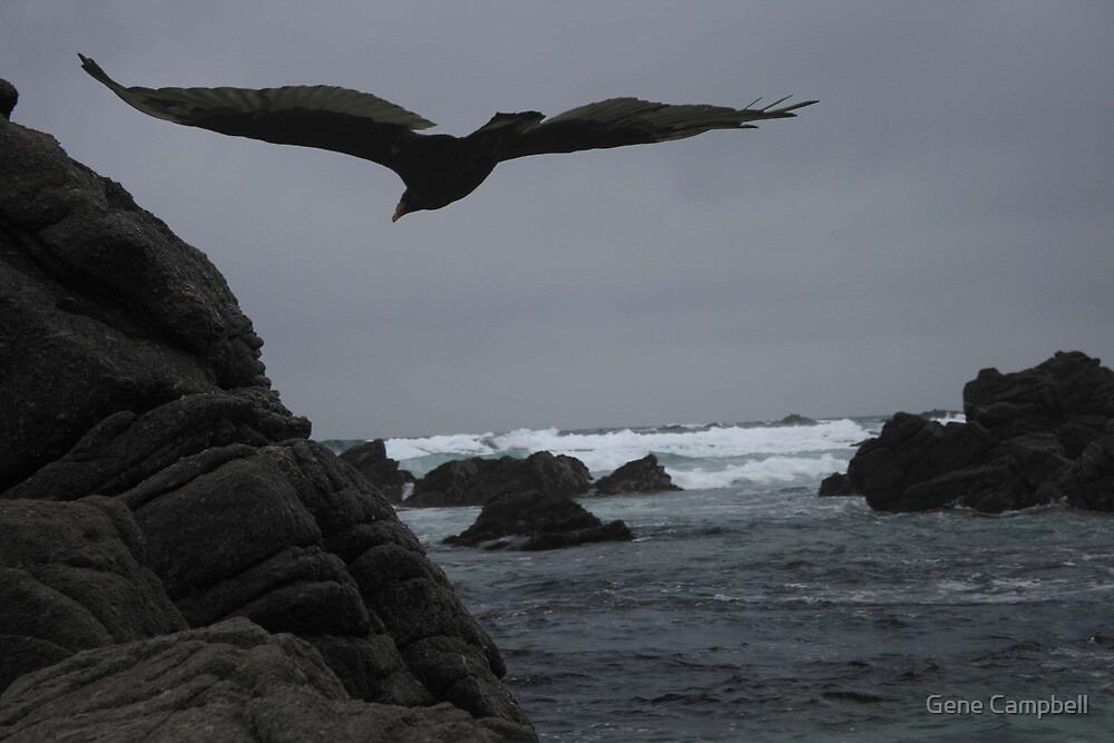 Pacific Gray by Gene Campbell