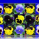 Pansy Faces Collage  by BlueMoonRose
