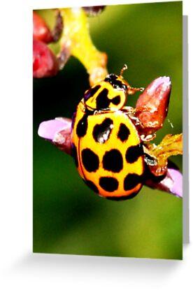 Pretty Ladybug by Coloursofnature