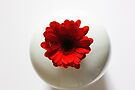 Simply red....and white by inkedsandra