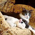 Cuddle Buddies by Nadya Johnson