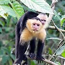 Monkeying Around by Lanis Rossi