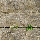 Plants on an Old Wall by Declan Lopez