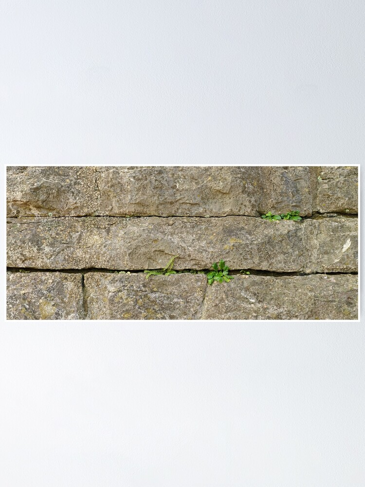 Alternate view of Plants on an Old Wall Poster