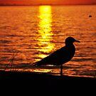 Busselton Sunset Sillouette by Coralie Plozza