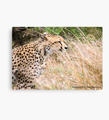 THE CHEETAH - Acin0nyx jabatus, in hiding... Canvas Print